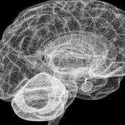 size_810_16_9_brain